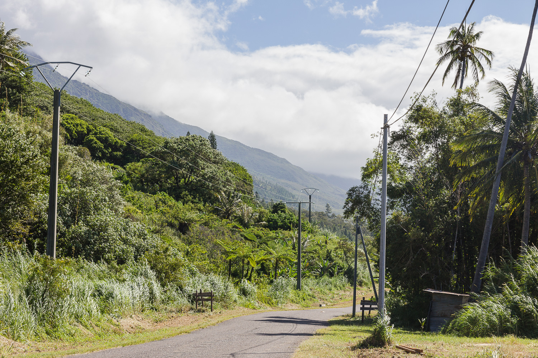 Nouvelle Calédonie route Hienghène palmiers vers poingam